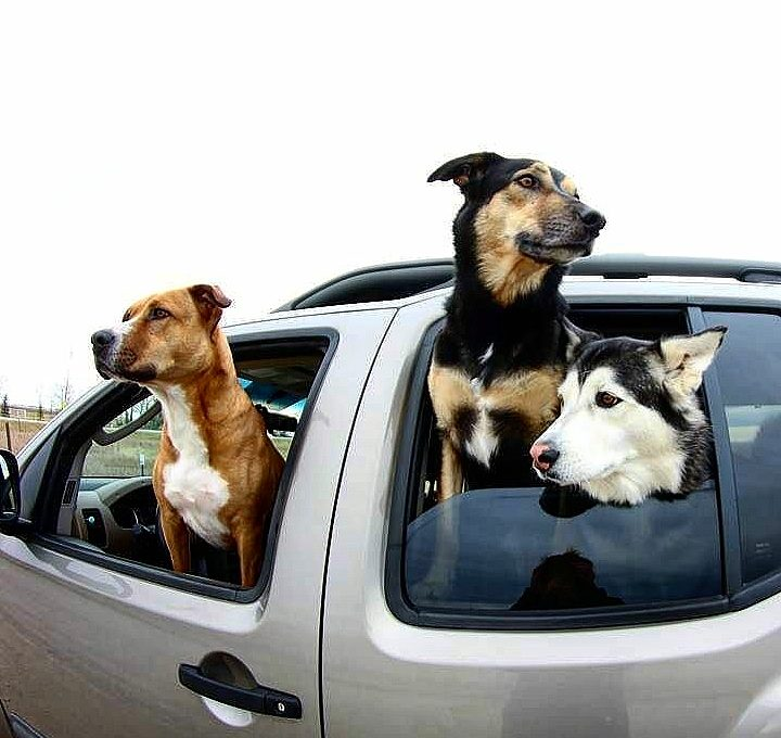 Wheeling With Dogs Travel Checklist